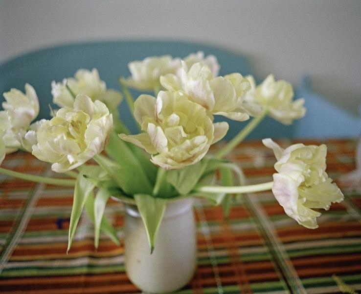 02_Tulips_2009_26cm (Copier)