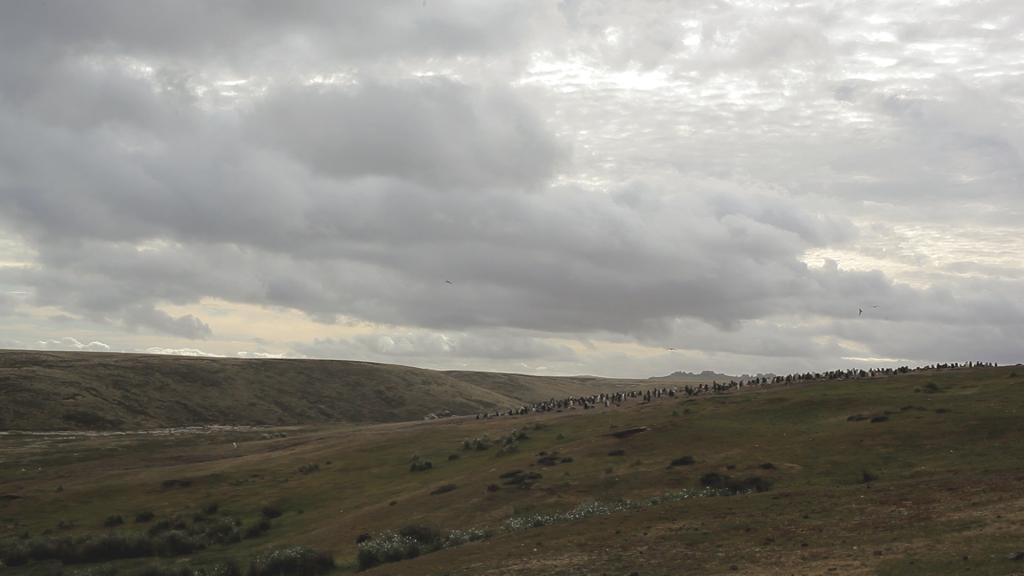3-colline-pingouin